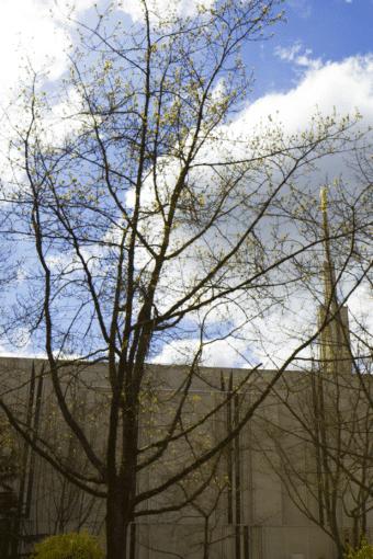 Seattle Getaway: Seattle LDS Temple