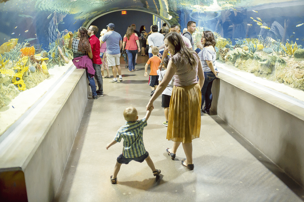 family date idea: this fun aquarium family activity is perfect for kids of all ages, and makes family fun so easy