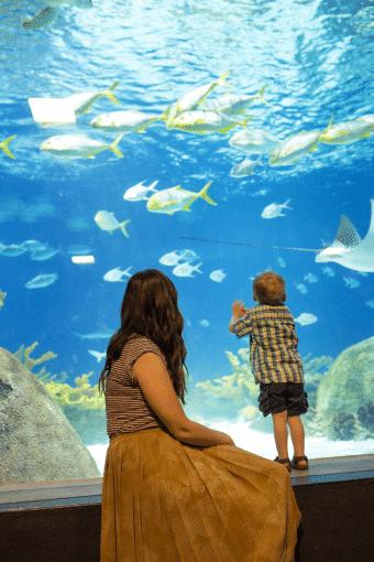 Sea Life Aquarium Family Date