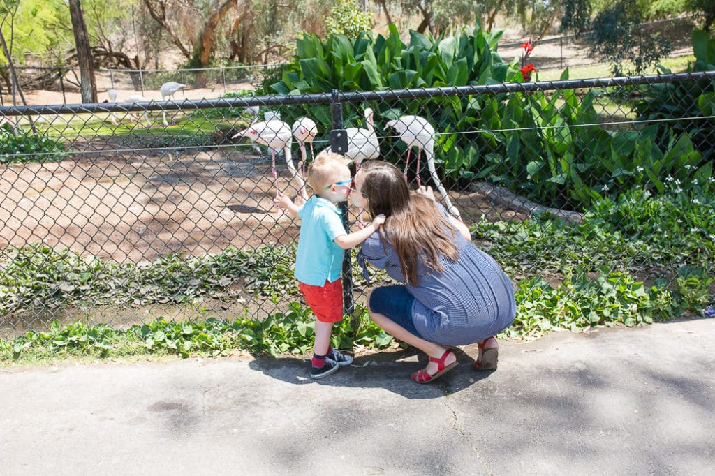 The Phoenix Zoo Family Date Friday Were in Love