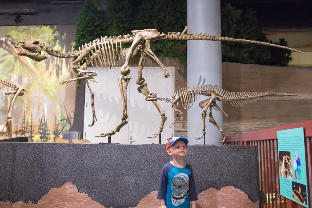 Arizona Museum of Natural History