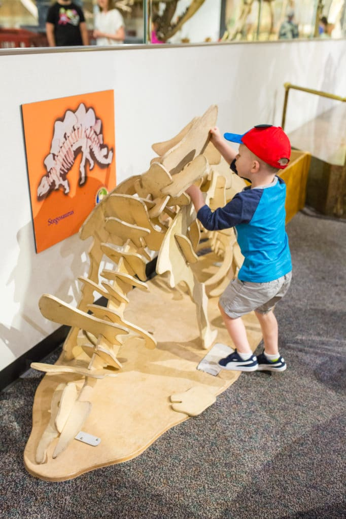 Arizona Museums for Kids